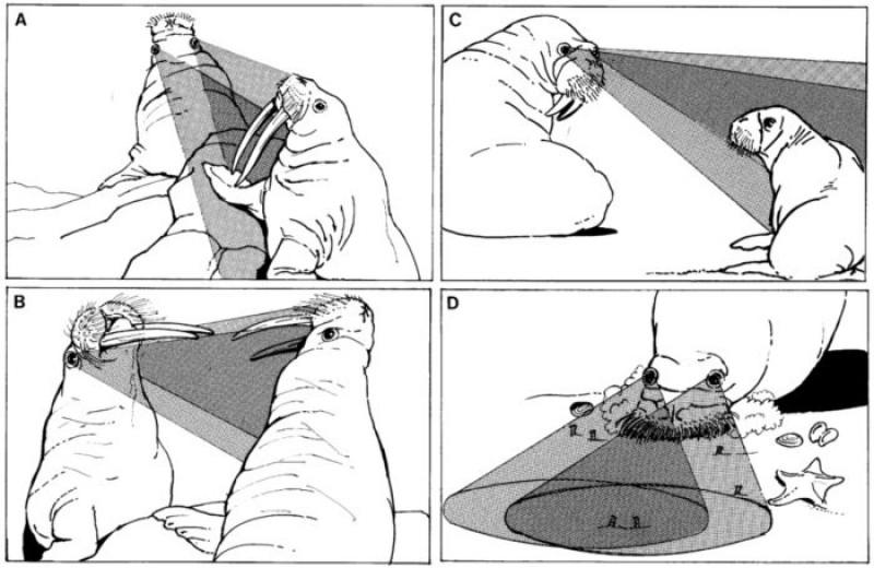 5 самых забавных научных иллюстраций: рыба в космосе и морж-супермен