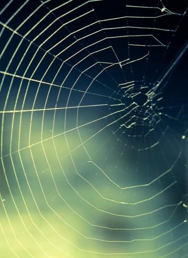 Сколько пауков в день съедает человек: наука против мифов