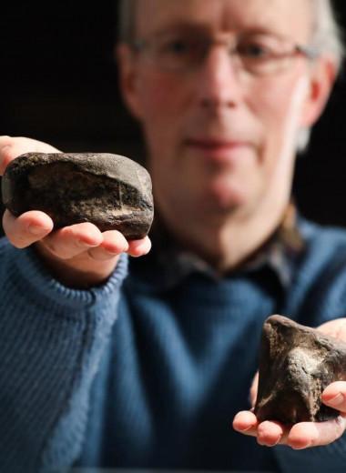 В Ирландии впервые нашли останки динозавров