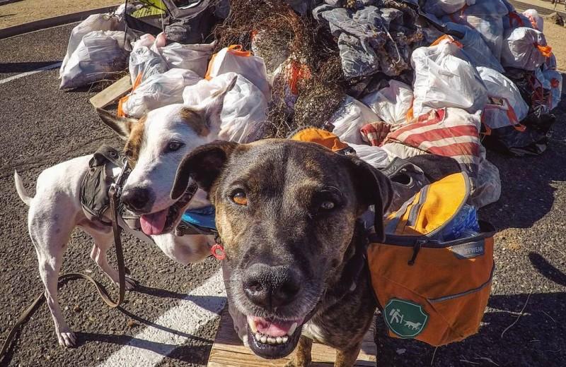 Собаки убирают мусор за людьми: видео