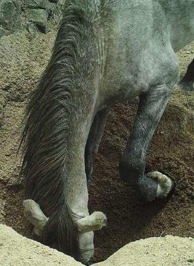 Как ослы приносят пользу пустыням