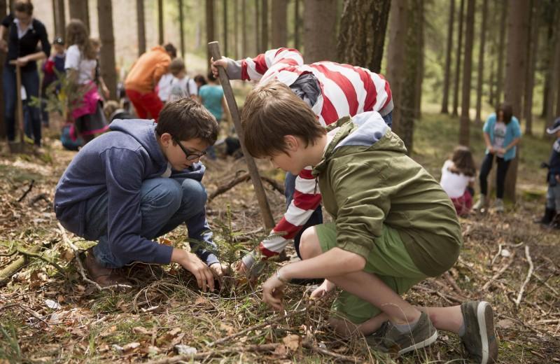 Более 60 000 деревьев высадят в России благодаря народному финансированию