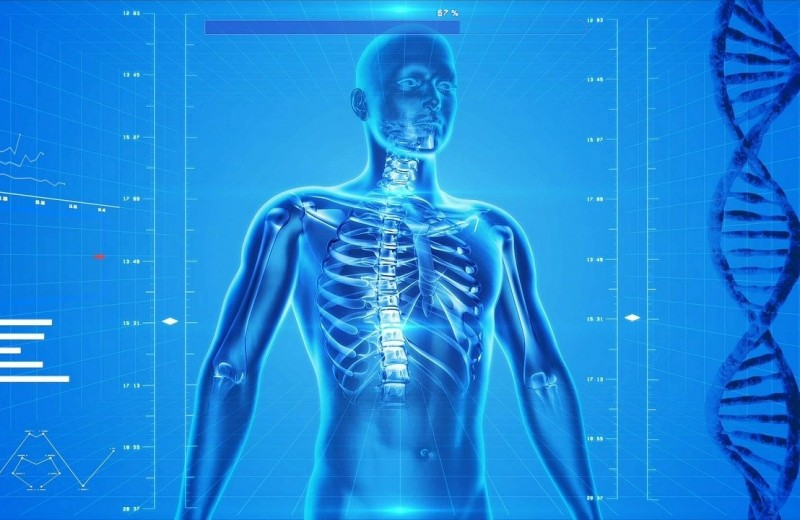 The Scientist (США): новые открытия в анатомии человека