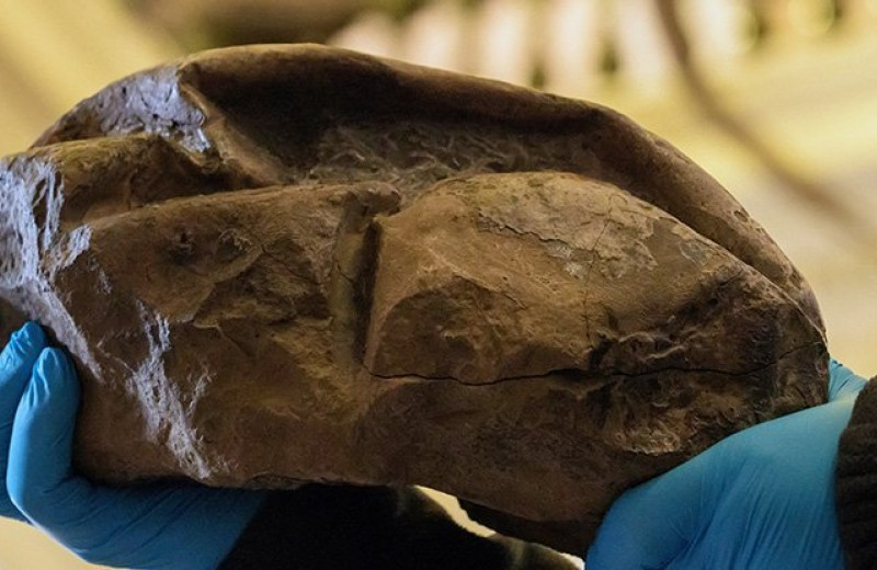 Странная окаменелость из Антарктики: что это такое?