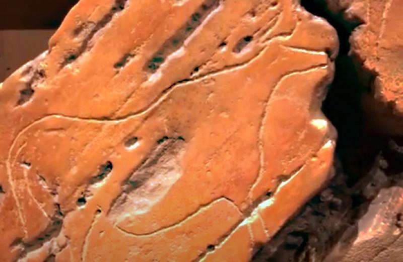 В долине реки Коа нашли крупнейшие палеолитические петроглифы с быками