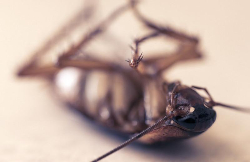 Дустом их: что, если бы тараканов не было