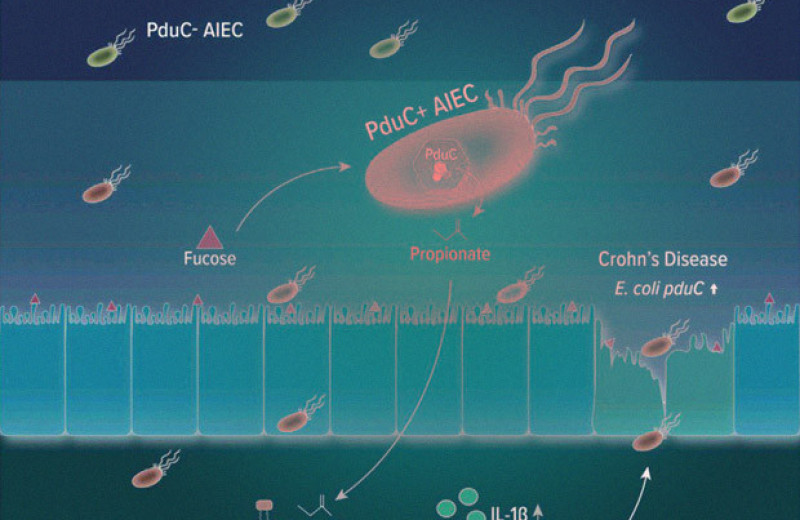 У вызывающей болезнь Крона бактерии нашли слабое место