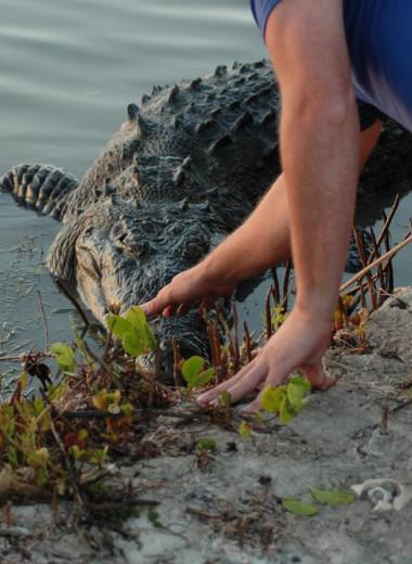 Крокодилы любят играть и умеют дружить. Даже с людьми!