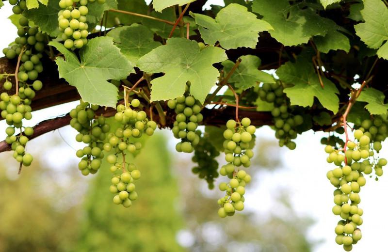 Найдено самое старое свидетельство распития вина древними греками