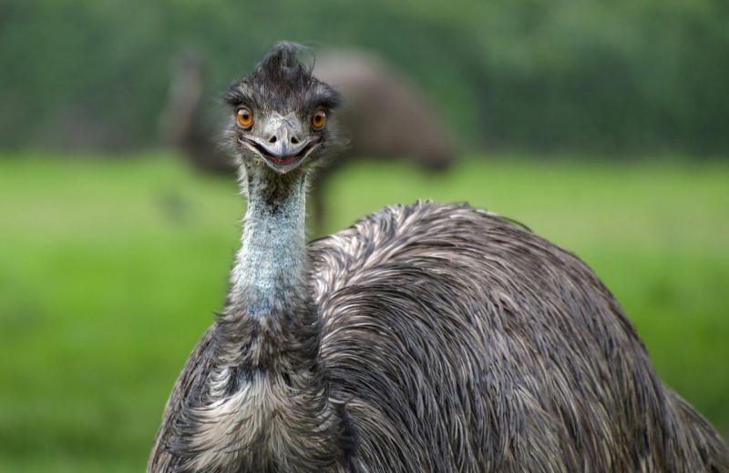 Животные могут смеяться: зачем они это делают?