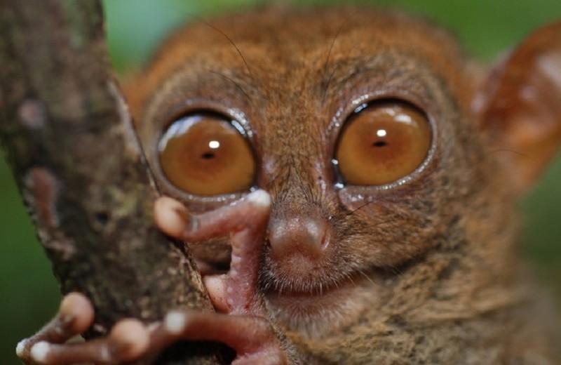 Как взглянуть на мир глазами долгопята