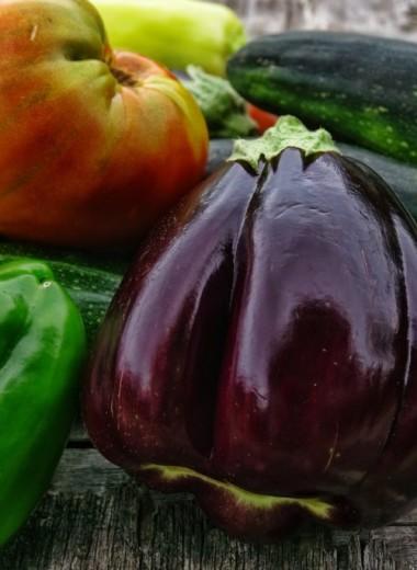Кабачки и баклажаны: 9 простых и оригинальных рецептов