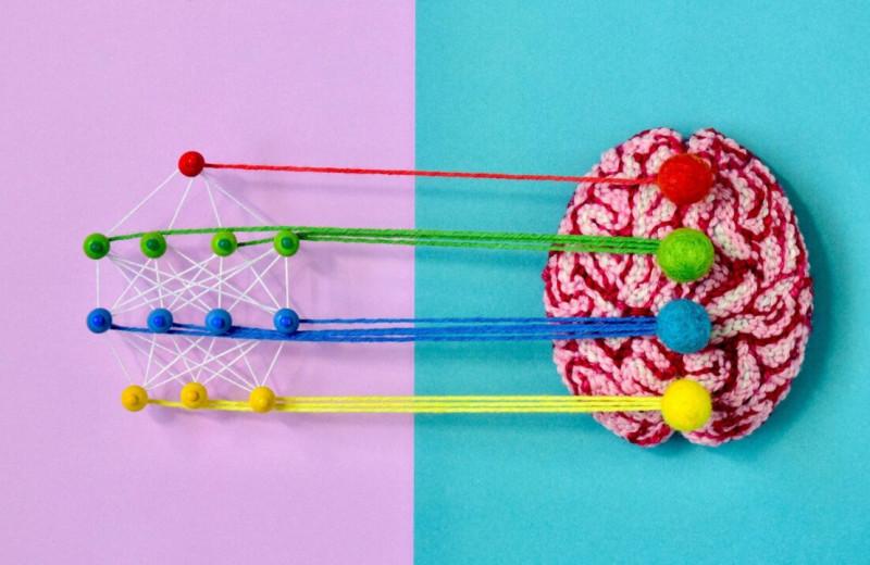 Не просто «чёрные ящики»: как нейросети применяют не для замены людей, а для изучения работы мозга