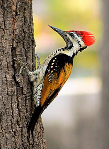 По ком стучит дятел: 6 занимательных фактов о лесных птицах