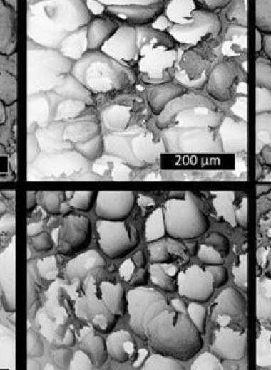 Химики превратили биоразлагаемые вилки в пену