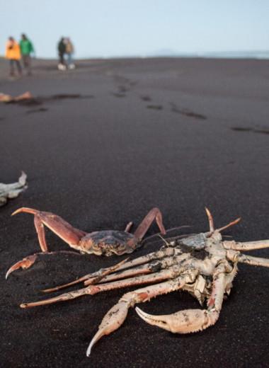 Как водоросли могли уничтожить жизнь на дне залива Камчатки и почему это считают главной версией экокатастрофы