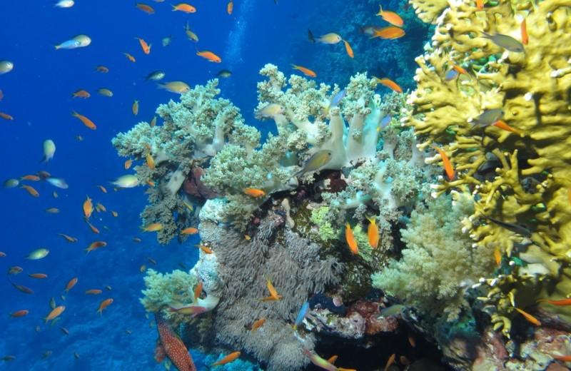 На египетских курортах запретят кормить рыб