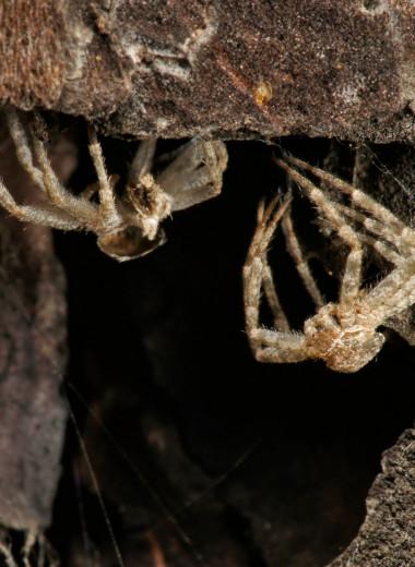 Зачем людям пауки? 3 удивительных причины