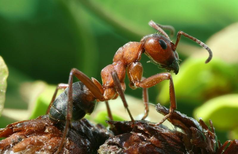 Как профессия муравьёв влияет на их обучаемость