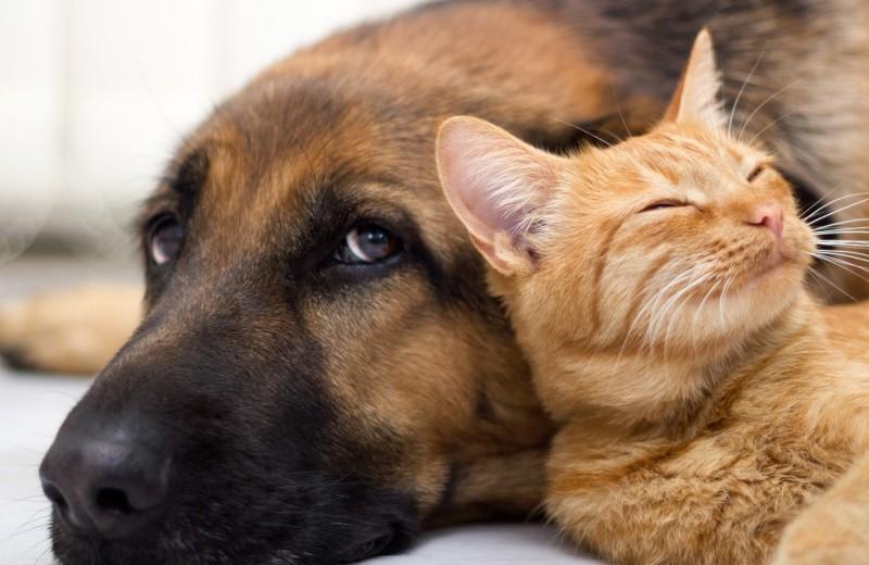 Основной инстинкт: почему кошки не ладят с собаками
