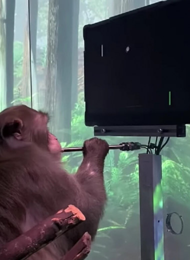 Компания Илона Маска вживила в мозг обезьяны чип, чтобы та смогла сыграть в видеоигру силой мысли