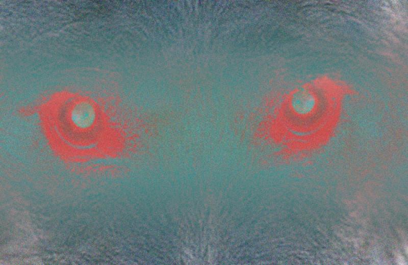 Склонность собак к агрессии связали с породой и опытом владельца