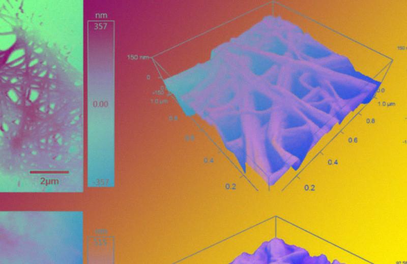 Бактериальные волокна из целлюлозы превратили в фильтровальную мембрану