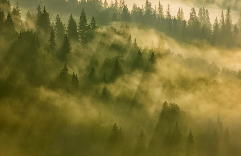 Биомасса Земли: больше всего весят растения