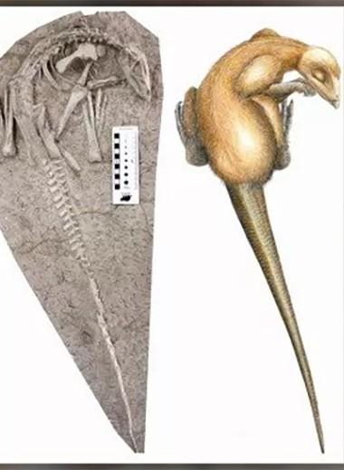 Погруженные в вечный сон: неизвестные науке динозавры были погребены заживо