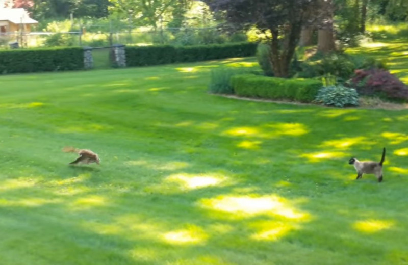 Неудачный побег кролика от двух хищников: видео