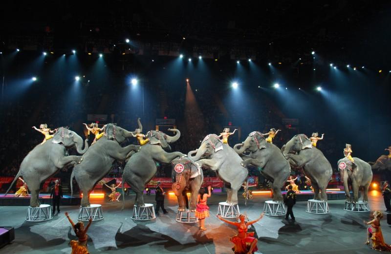 В Словакии запретят цирковые шоу с участием зверей
