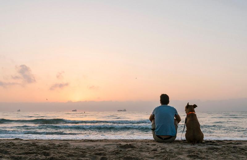 Деморализующий кнут: почему самобичевание не приводит к успеху