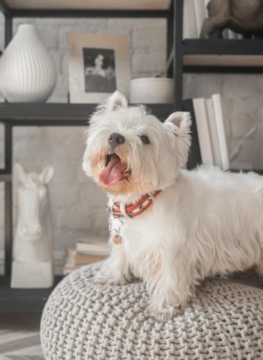 Как уехать в отпуск и не беспокоиться за свою собаку