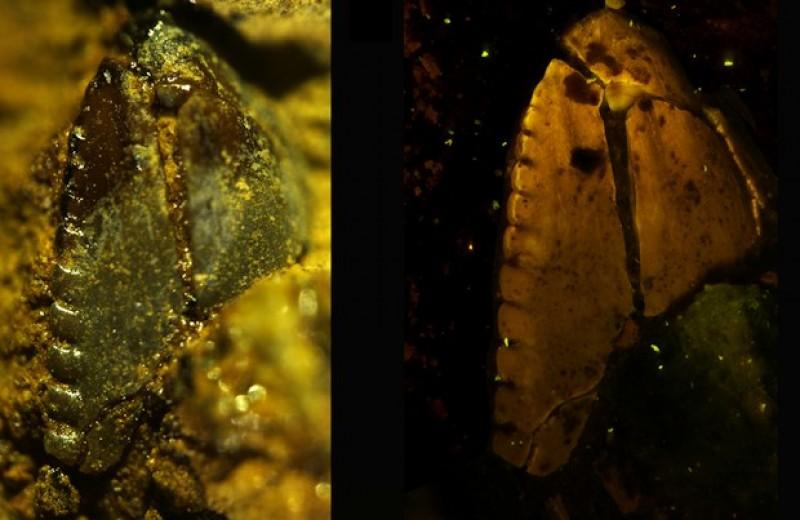 На Аляске нашли остатки молодого дромеозаврида