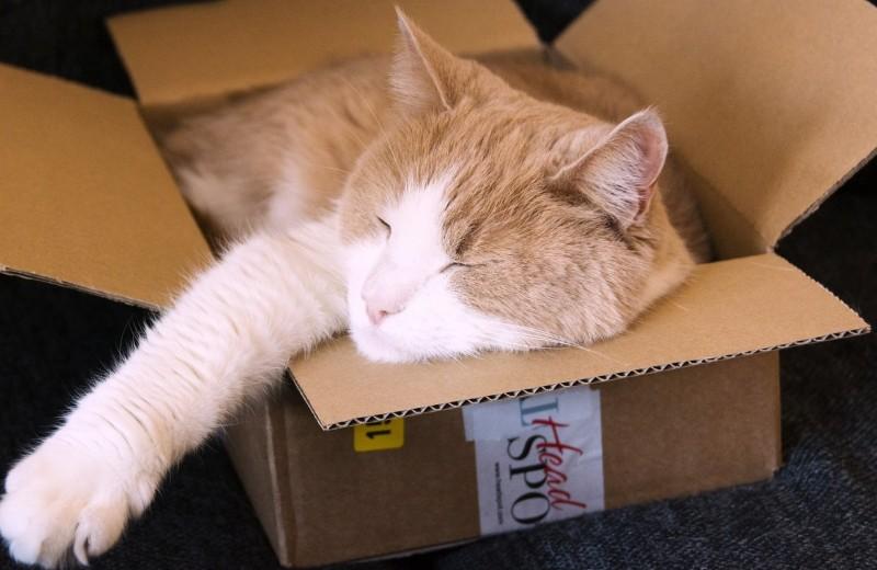 Хвостатая наука: 9 странных привычек собак и кошек