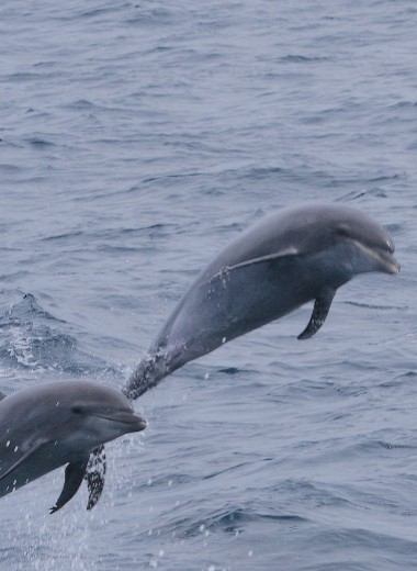 Как дельфины выбирают себе друзей