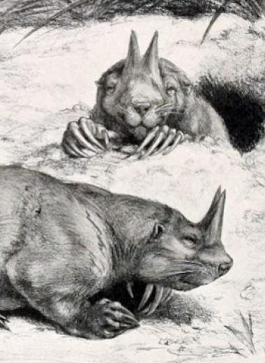 Рога на носу ископаемого псеводсурка оказались защитой от хищников