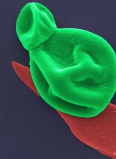Черный фосфор может стать идеальным средством борьбы с бактериями, устойчивыми к любым антибиотикам