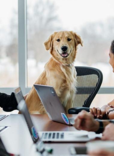 Как стать новым боссом бывших коллег: 2 фундаментальных подхода