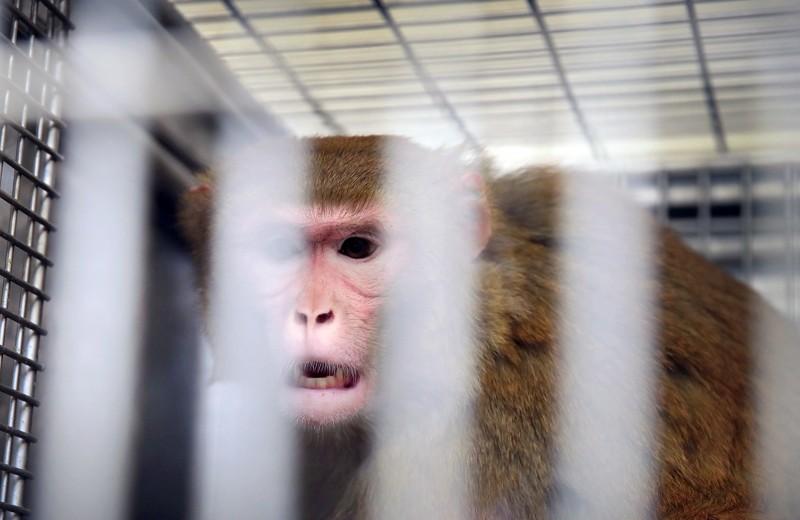 Прорыв будет там, где больше дозволено: зачем Китаю сомнительные эксперименты с геномом человека