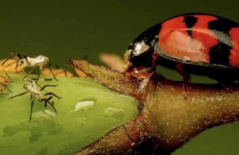Ученые нашли природный пестицид без вредных элементов