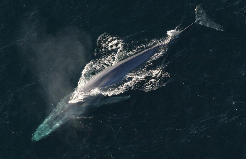 Кто кого поборет: самые большие живые существа в море, на суше и в воздухе