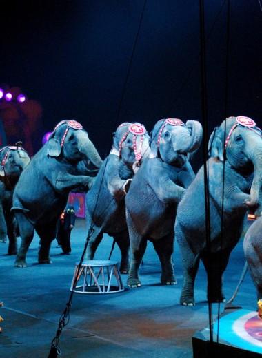 В Швеции запретили цирковые шоу со слонами