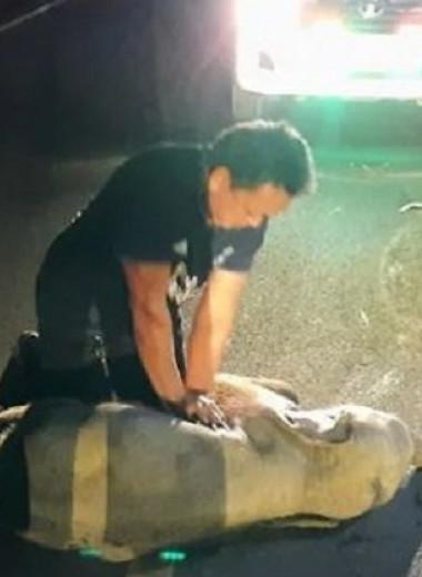 Спасатель реанимирует слоненка непрямым массажем сердца: видео
