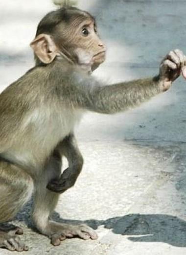 Ученые назвали человека канцерогенным видом