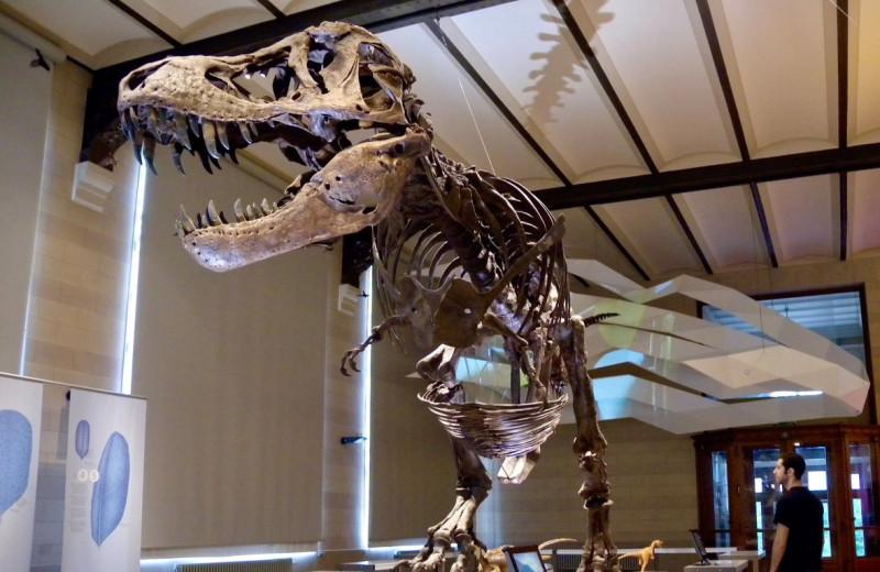 Как взвесить динозавра: новое исследование