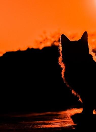 Убийца, который ходит сам по себе: самые опасные породы кошек