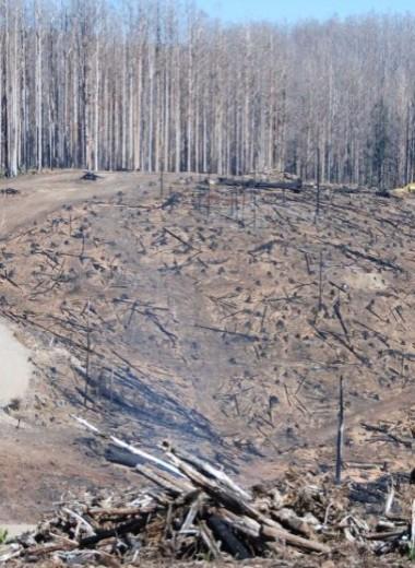 Пространственный анализ австралийских пожаров указал на недостатки природоохранной политики