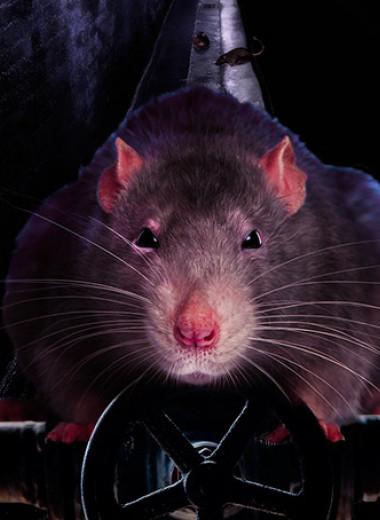 Серое существо. Все, что ты хотел знать о крысах, но не додумывался спросить