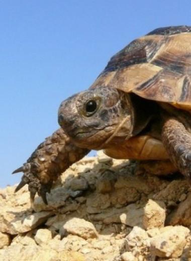 «Древнее динозавров». Что угрожает редким черепахам, пережившим катастрофу мезозоя